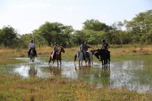 Horses - 051 (IMGL0458 - 246 - 20171216 - (Original Filename IMGL0458))