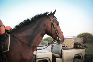 Horses - 087 (IMGL1114 - 305 - 20171216 - (Original Filename IMGL1114))